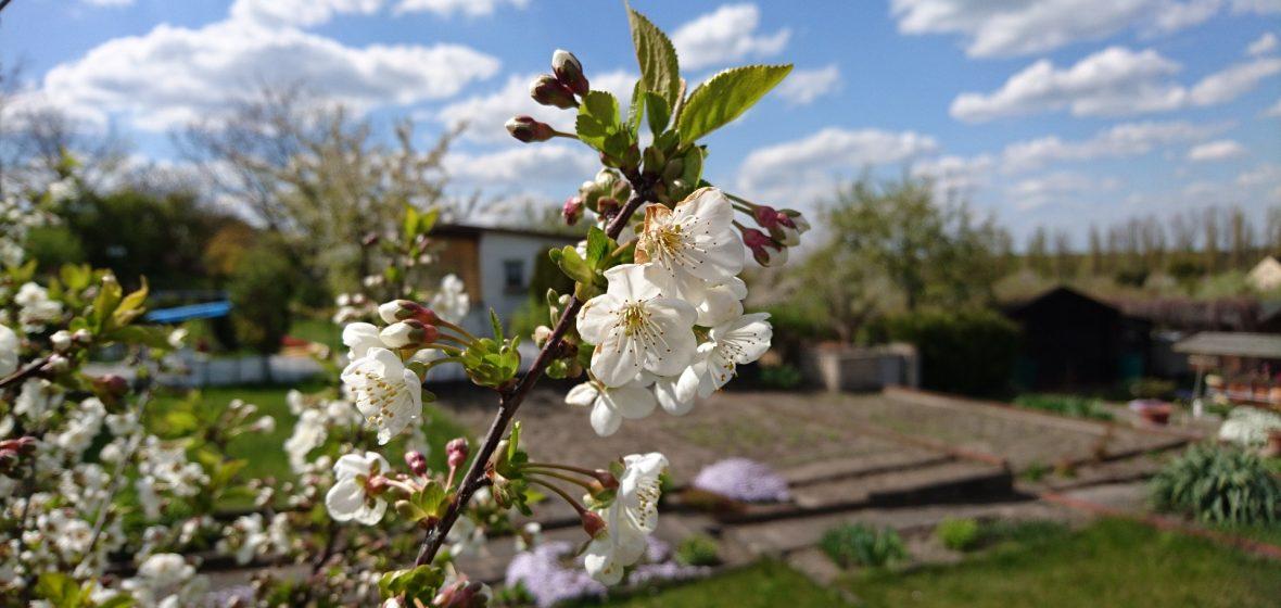 Berewood Blossom Waterlooville