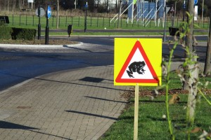 Common Toad Crossings