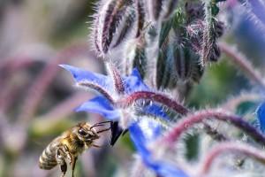 Bee Happy at Berewood
